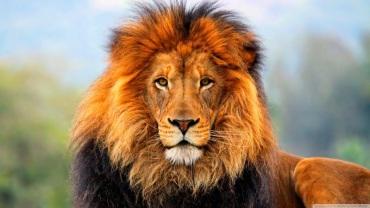 300an-nama-singa-dalam-bahasa-arab